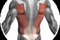 Postura: la fascia correttrice per spalle schiena
